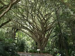 brisbane botanic gardens mt coot tha brisbane botanical gardens