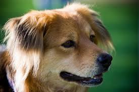 austin ptsd dog training certified austin dog trainercertified