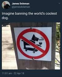 Skateboarding Memes - cool