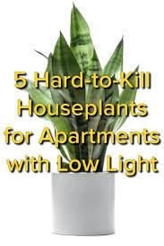 low light houseplants plants that don t require much light low light indoor plants that are easy to grow houseplants indoor
