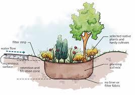 native plant garden design rain gardens better ground