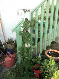 how to make a vertical strawberry tube planter urban greenspace