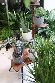 655 best indoor gardening images on pinterest plants indoor