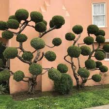the unique trees of san francisco others