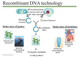 recombinant dna technology dna isolated from two sources and cut