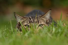 easily keep backyard birds safe from cats