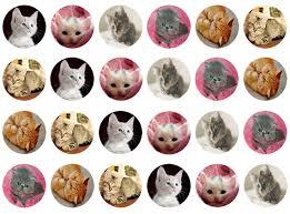 edible prints kitten cupcake toppers cat edible toppers edible prints cupcake