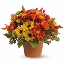 halloween flower delivery in irwin belak flowers