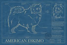 american eskimo dog intelligence american eskimo animal blueprint company