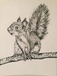 red squirrel pencil drawing print a4 size artwork signed by