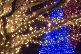 christmas lights tree wrap making the season bright longwood gardens