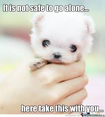Cute Puppies Meme - thank you meme and humor