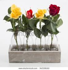 Vases Of Roses Roses In A Glass Vase Stock Images Royalty Free Images U0026 Vectors