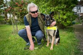 Blind Dog And His Guide Dog Blind Man Whose Guide Dog Was Run Over By Taxi Told He Could Face