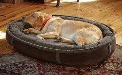 Tempur Pedic Dog Bed Orvis Dog Beds Bedding Bed Linen