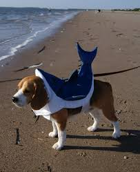 top 5 halloween costumes for beagle pups that will turn heads a