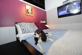 chambre pour chien vienne des chambres d hôtel de luxe pour les chiens