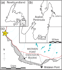Newfoundland Map A New Assemblage Of Juvenile Ediacaran Fronds From The Drook