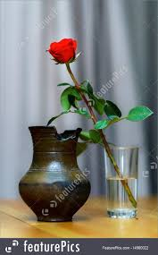 single rose in glass stock picture i4560022 at featurepics