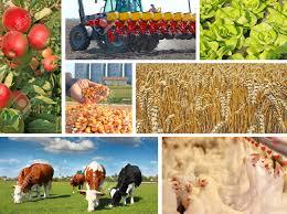 Die K He Landwirtschaft Collage Die Nahrungsmittelproduktion Mais