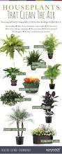 Indoor Flowers Best 25 Indoor Flowers Ideas On Pinterest Indoor Flowering