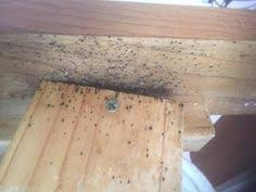 Bed Bugs Treatment Cost Bed Bug Treatment Flemington Melbourne Bed Bug Control Melbourne