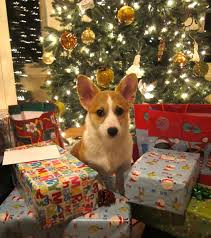 pets as christmas gifts alabama public radio