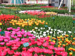 horrible most beautiful flower garden on garden ideas with most
