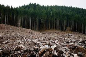 Oregon Forest images Report forestry is no 2 source of greenhouse gas in oregon jpg