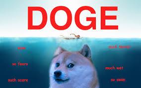Doge Meme Original - love lol dog photography funny haha beautiful movie like photo