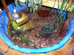 turtles turtlewife u0027s weblog page 2