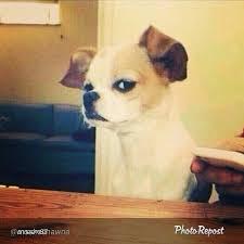 Side Eye Meme - side eye dog meme generator