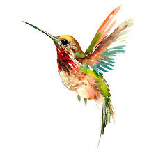 watercolor hummingbird tattoo design