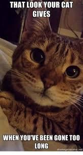 Angry Cat Meme Generator - 25 best memes about grumpy cat grumpy cat memes
