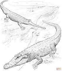 american crocodile and indian gharial coloring page free