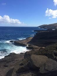 how to say happy thanksgiving in hawaiian hawaiian buns flourish king arthur flour