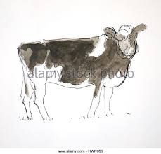 cow field drawing stock photos u0026 cow field drawing stock images