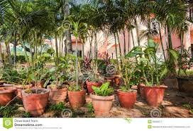 many clay pots with tropical plants and flowers in a shady garden