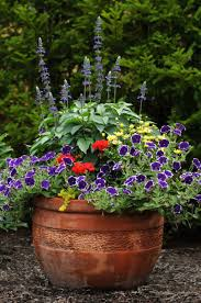 Plants For Patio by Creative Patio Plants For Sun Best Home Design Amazing Simple At