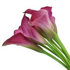 pink calla pink calla flower
