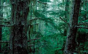 Washington Forest images The enchanted olympia forest jpg