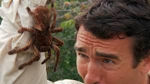 23 Funny Spider Memes Weneedfun - world s biggest spider and giant spiders topbestpics com
