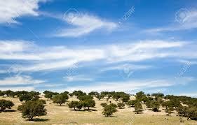 unusuall landscape sparse trees blue sky maroc