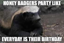 Honey Badger Memes - honey badger birthday imgflip