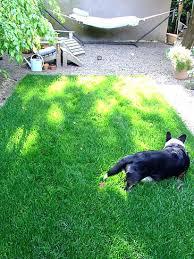 Grass Area Rug Grass Area Rug Dean Indoor Outdoor Carpet Green Artificial Grass
