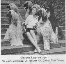 afghan hound racing uk afghan hound times rifka afghan hounds uk by clair race rifka 1969