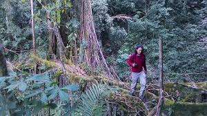living root bridges meghalaya india for details contact