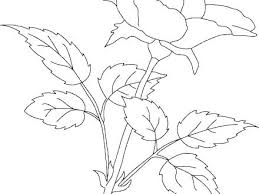coloring pictures of hibiscus flowers plants coloring pages preschool hibiscus flowers page top rated
