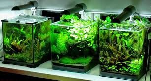 Nano Aquascape All About Betta Fish Nano Aquascaping Best Suited For Plakats