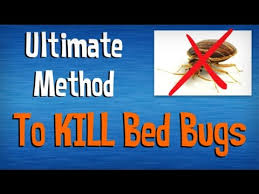 Home Remedies For Getting Rid Of Bed Bugs How To Kill Bed Bugs Fast Best Advice On Killing Bed Bugs